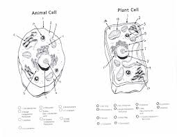 animal cell unlabeled black and white. Unlabelled Animal Cell Diagram Beautiful Coloring Page Inside Unlabeled Black And White