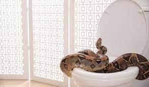 Selain kita perlu mengetahui cara paling tepat untuk mengusir ular ada. Ular Masuk Rumah Ini 10 Tips Pencegahan Anda Boleh Cuba Propertyguru Malaysia
