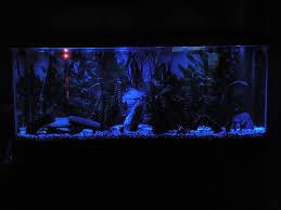 led aquarium moonlights steps
