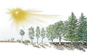 Image result for heavy sun light pic