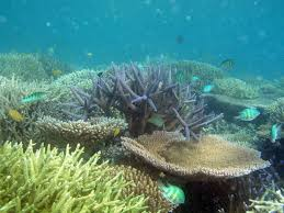 ocean acidification the devastating truth marine science today coral reef in