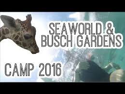 busch gardens florida resident tickets. Busch Gardens And Seaworld Tickets Florida Residents Mp4 Mp3 3Gp Resident