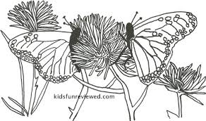 Small Picture Butterfly Coloring Pages The Kids Fun Review