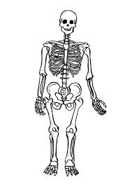 Skeleton Coloring Pages Skeleton Human Skeleton Coloring Pages