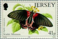 Image result for papilio rumanzovia
