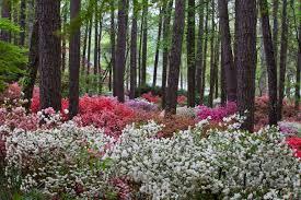 callaway gardens overlook azalea gardencallaway gardens overlook azalea garden