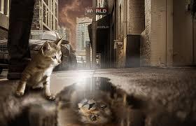 hd wallpaper lion cat mirror image