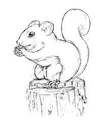 Squirrel Coloring Pages Squirrel Coloring Pages Squirrel Coloring