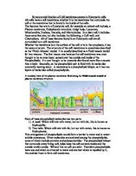 cell membrane essay rutgers essay cell membrane structure paper