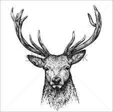 Sketches Animal 9 Animal Sketches Free Premium Templates Free Premium Templates