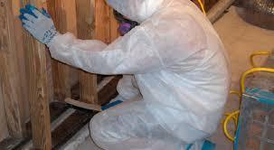 Image result for mold remediation