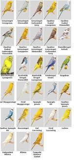 27 Best Good Bird Information Images Pet Birds Parakeet