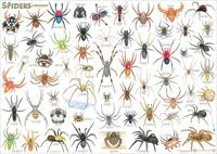 Spiders Chart Poster