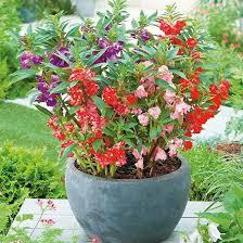 12 beautiful rainy season flowers you