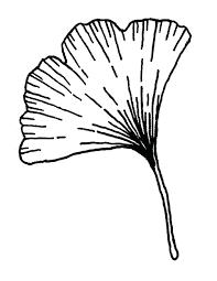 963x1246 misc leaves jungle leaf outline template holly jungle leaf outline