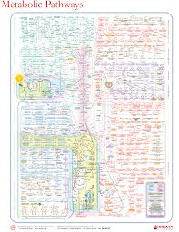 Metabolic Pathways Chart This Poster Is Not Even Close To Comprehensive But Its Cool