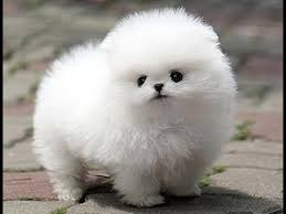 most beautiful puppies in the world. 30 MOST CUTEST PUPPIES IN THE WORLD 2017 Inside Most Beautiful Puppies In The World