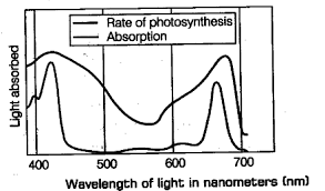 Action Spectrum In The Figure Given Below The Black Line Upper Indicates