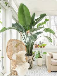 25 Best Ideas About Large Indoor Plants On Pinterest Plants Indoor, Indoor  Plant Lights And
