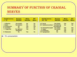 Cranial Nerve Examination