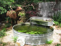 as i was getting ready to leave the garden i passed by this stock tank combo with a large metal elk standing nearby and two decoy ducks in the upper tank