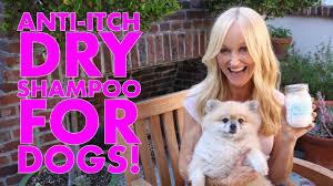 diy dry shampoo for dogs natural dog flea odor itch solution