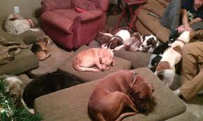 lots of dogs together.  Lots Lots Of Dogs Inside Of Together