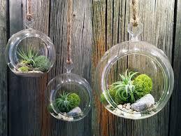 diy hanging airplant terrarium work plant terrariums