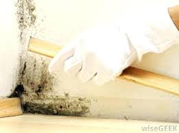 best mildew in closet causes cause of musty smells smell how to get out basement clothes mildew in closet
