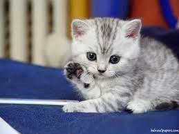 Cute Kitten Wallpapers - Top Free Cute ...