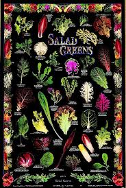Salad Greens Poster Amazing Gardens Growing Tomatoes