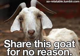 Goat Quotes Cool Funny Daily Goat Shared By FunnyDaily On We Heart It