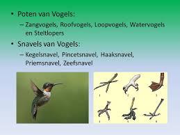 poten vogels