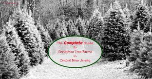 Christmas Tree Cultivation  WikipediaChristmas Tree Cutting Nj