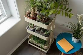 houseplant starter kit reviews by