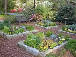 organic home vegetable garden