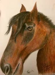 horse drawing in color. Fine Drawing A Color Pencil Drawing Of Faith In Horse Drawing Color D