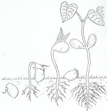 Small Picture New Plant Coloring Pages 4 2382