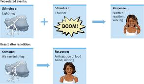 Example Of Classical Conditioning Psychological Conditioning Coursework Academic Service