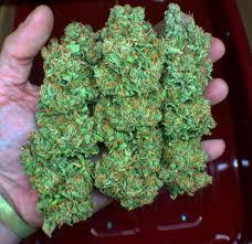 usa medical marijuana