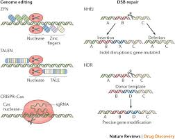 Genome Editing Delivery Technologies For Genome Editing Nature Reviews Drug Discovery