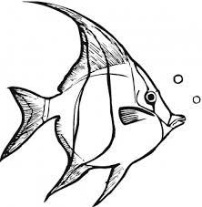 Small Picture Tuna clipart fish coloring Pencil and in color tuna clipart fish