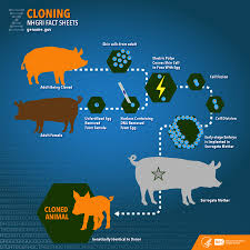 cloning fact sheet national human research institute nhgri enlarge the illustration