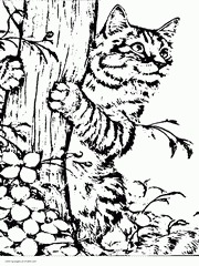 See more ideas about coloring pages, coloring books, free coloring pages. 100 Animal Coloring Pages For Adults Difficult