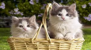 images of beautiful cats free hd wallpapers