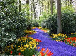 Image result for springtime  landscape