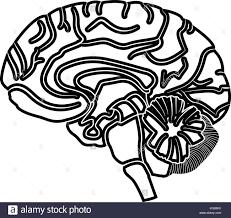 Brain it is black icon flat style stock vector