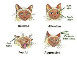 Cat Body Language Chart Communicating With Cats Cat Body Language King West Vets