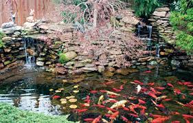 Httpsipinimgcom236xe101b6e101b64481ecc13Small Ponds In Backyard