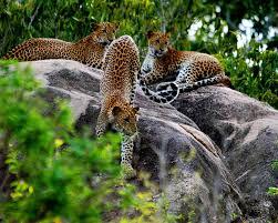 Image result for sri lanka image